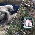 Двама бракониери зарязали въдици и хукнали да бягат след акция на ИАРА край Бургас