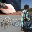 И розово фламинго е загинало след сблъсък с електропровод край Бургас (ВИДЕО)