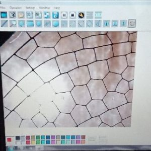 Как изглежда крило на водно конче под микроскоп?