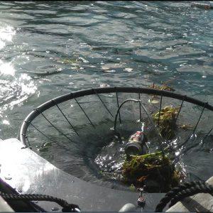 """Стартира поредица инициативи под мотото """"Морето радост и живот ни дава, отпадъци не заслужава!"""""""