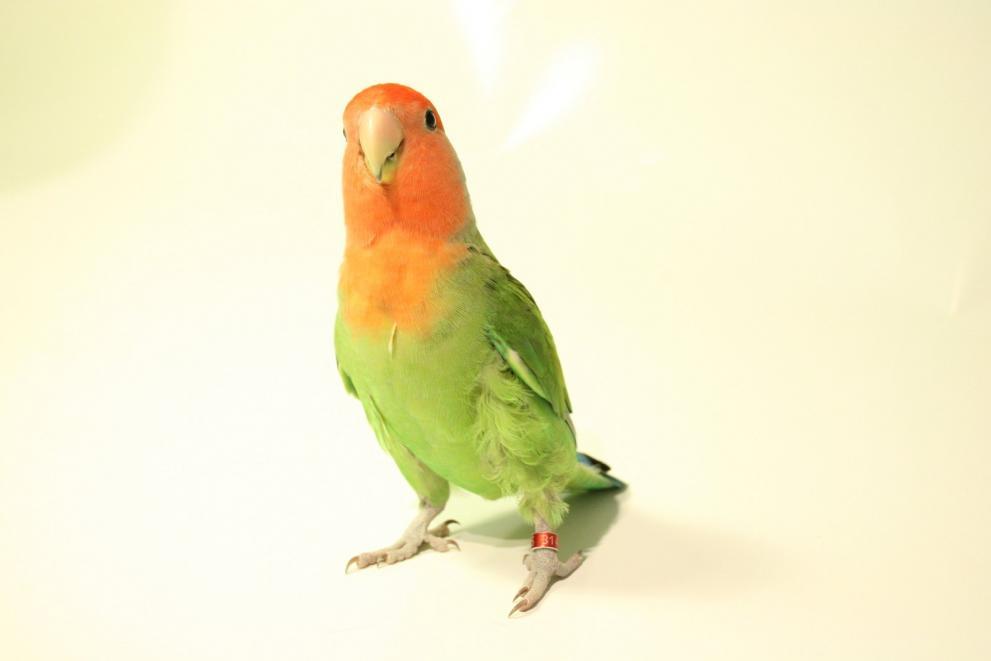 21 защитени животни са регистрирани в РИОСВ-Бургас